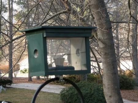 Bluebird Feeder 1- 00010