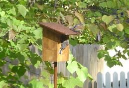 Bluebirds cataloging #1 11-11-2007