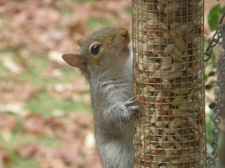 Squirrel-12-13-2007 015