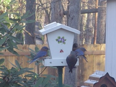 Bluebird Breakfast