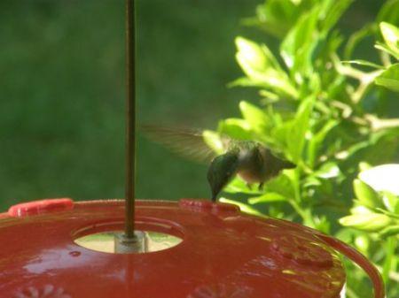 Tiny Visitor 06-01-2008