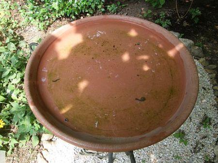 Dirty birdbath 07-30-2008
