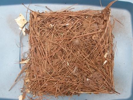 GCF nest #1