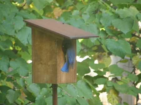 Bluebird cataloging nest boxes