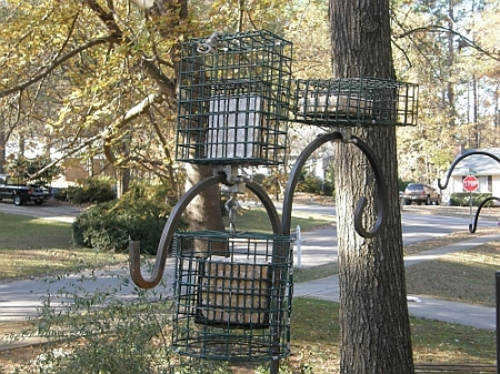 Suet feeder array