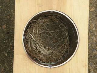 Gilbertson nest