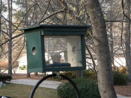 Bluebird-feeder-plans